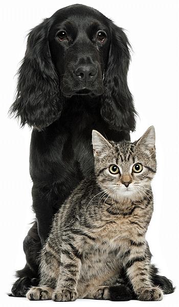 Annuleringsverzekering voor huisdieren