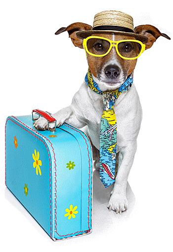 Reisverzekering voor huisdieren